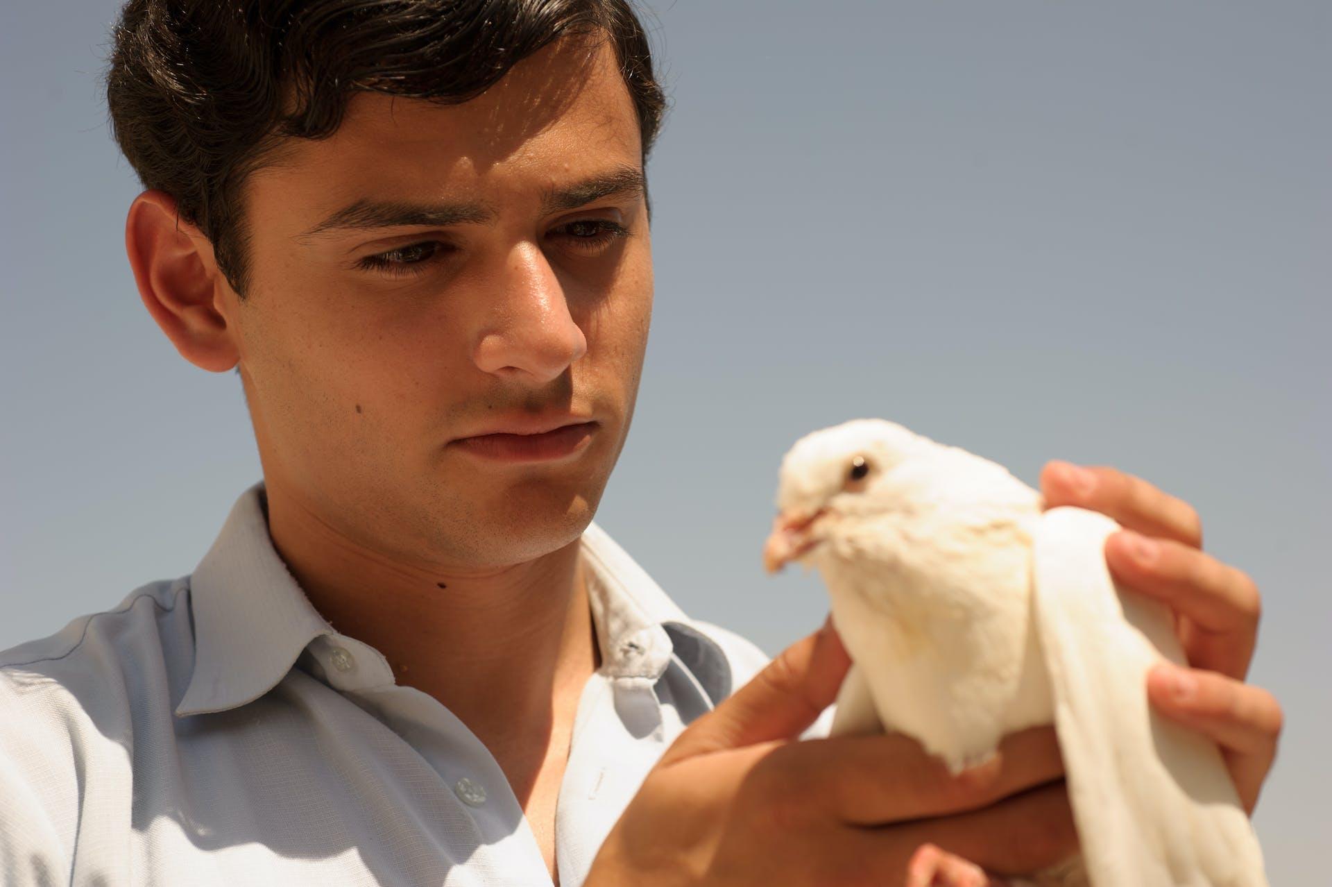 The Dove Flyer (Mafriach Hayonim)